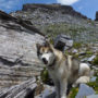 Wolf vor Wolfendorn