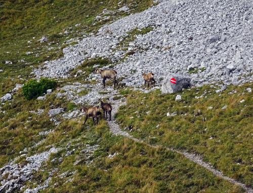 Im Föhnsturm auf die Wildangerspitze (04.10.2020)